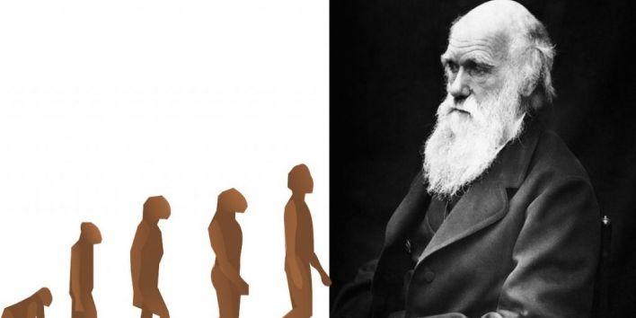 darwin evolution monkey human