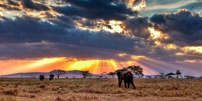 safari africa elephant nature wild