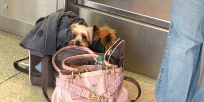 dog travel plane bag