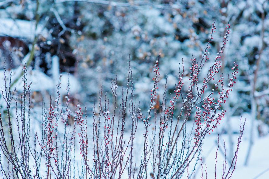 Hoe verzorg je jouw gazon tijdens de winter?