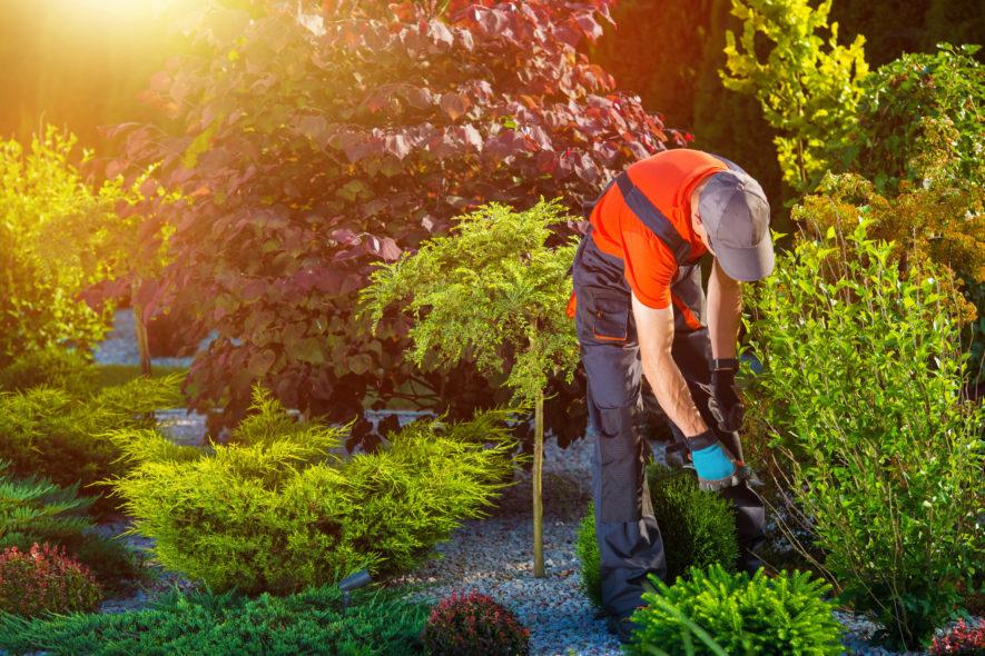 3 redenen om zeker te tuinieren