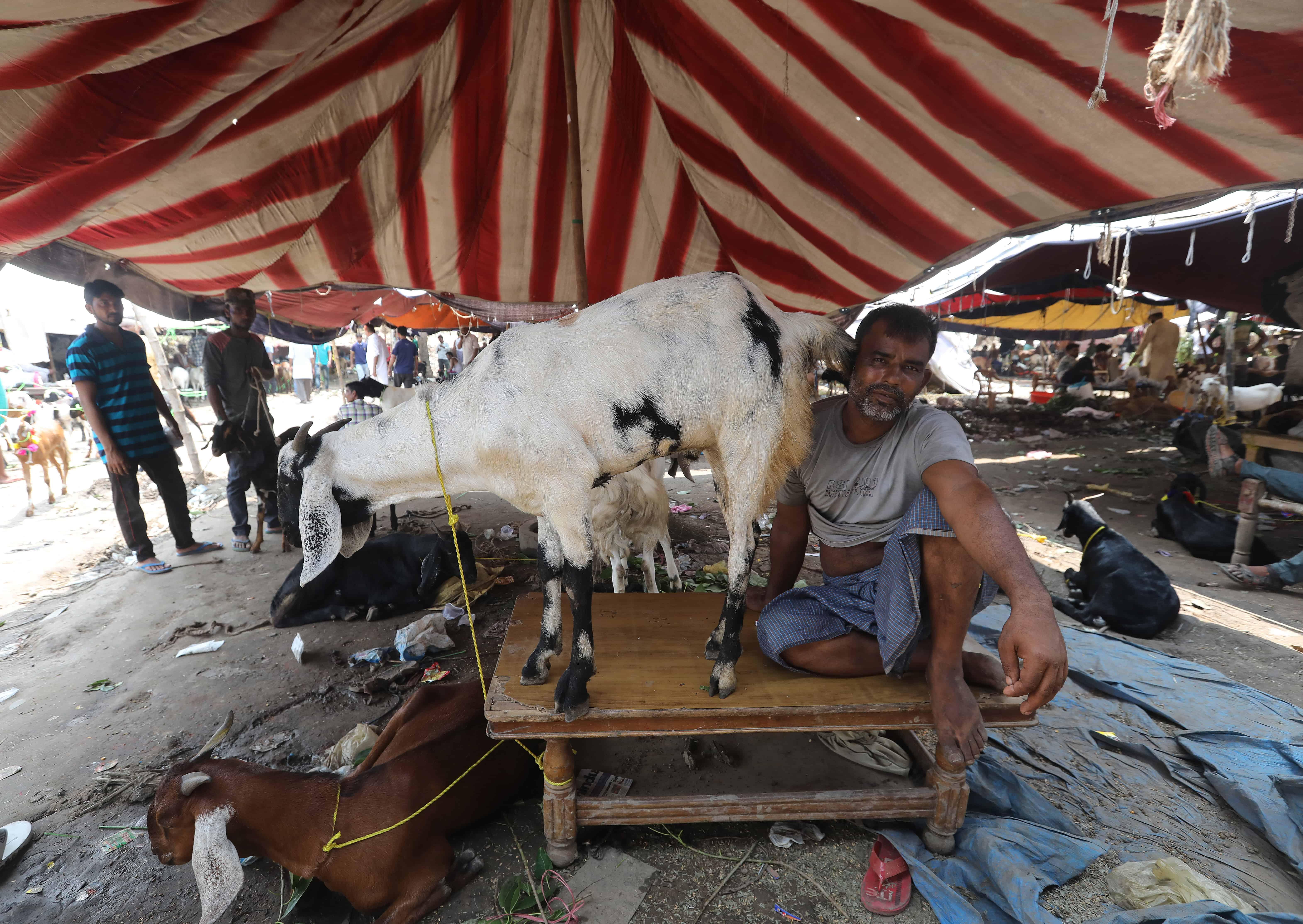Een man zit naast een geit op tafel in een tent in India.