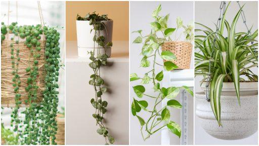 hangende kamerplanten