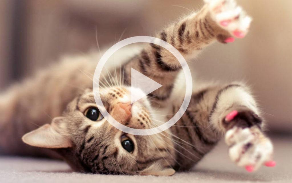 Hilarisch: de grappigste katten van 2015!