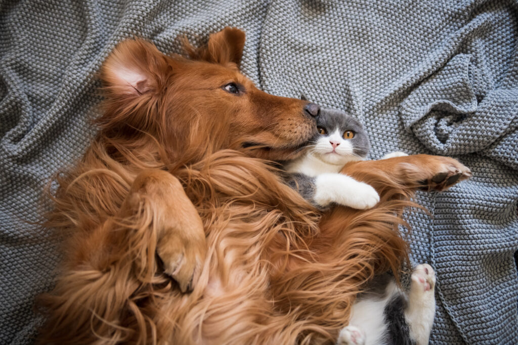 Katten, honden en corona: dit zijn de feiten
