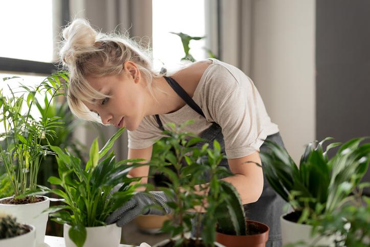 Absoluut geen groene vingers? Nederlands bekendste plantenblogster geeft 7 tips om je kamerplanten de winter door te krijgen