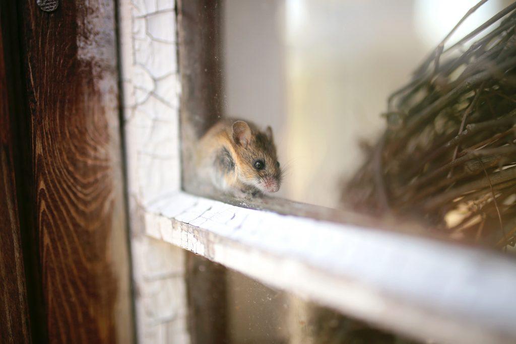 Maak een einde aan de muizenoverlast