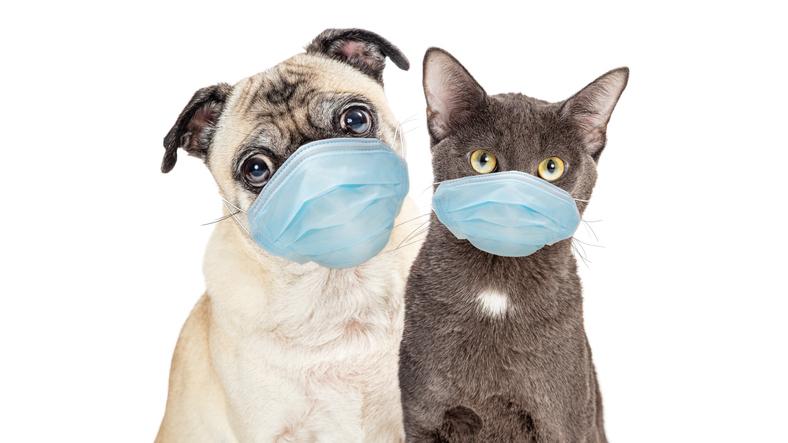 Nieuw onderzoek: 'Covid-19 komt vaak voor bij honden en katten'