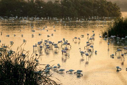 Doñana: het best bewaarde geheim van Andalusië