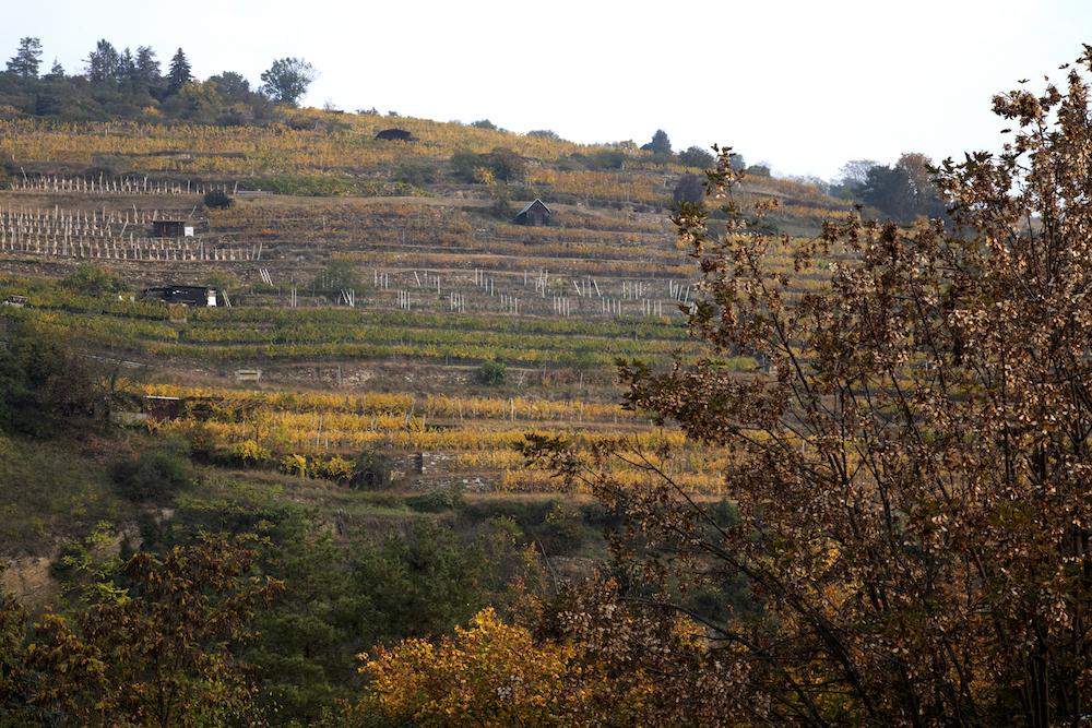 Op zoek naar de ziel van Oostenrijkse wijn - Krems