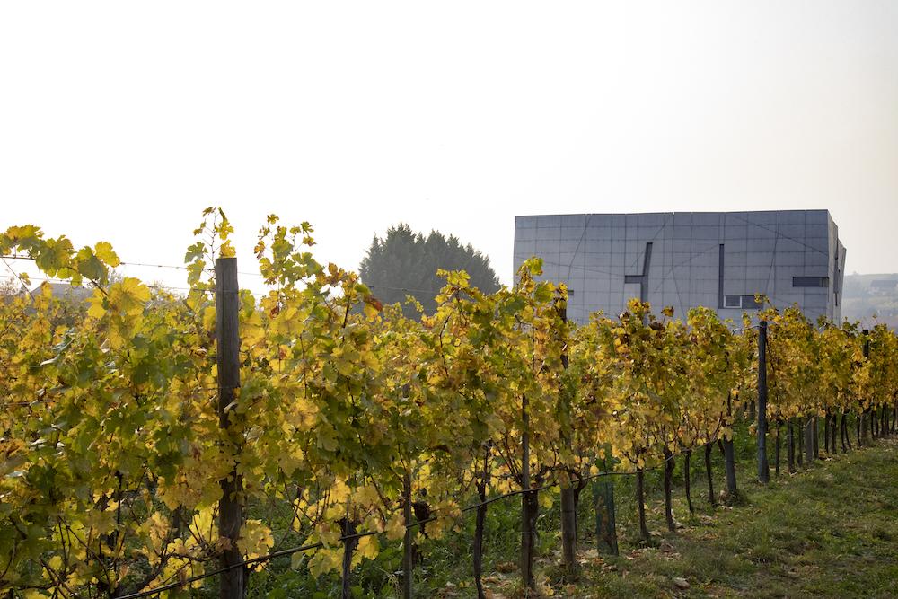 Op zoek naar de ziel van Oostenrijkse wijn - Loisium