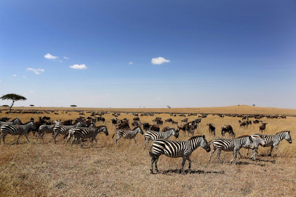 Bush & beach in Kenia - Maasai Mara