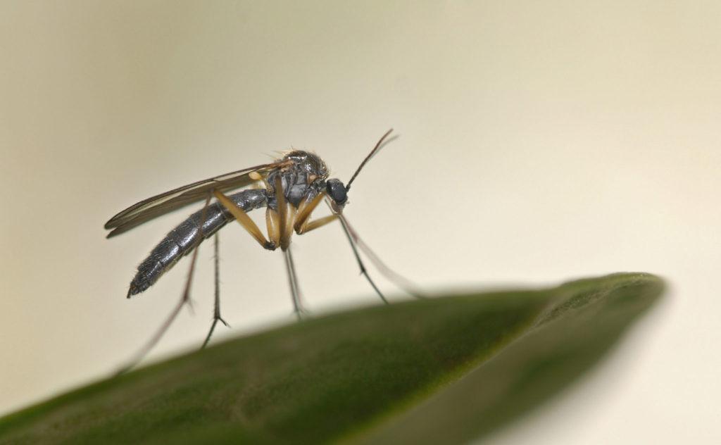 Oh no! Er is een muggeninvasie op komst
