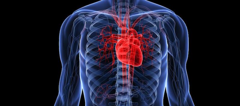 Onregelmatige hartslag – In Rust? Bij Kind? Teveel Stress?