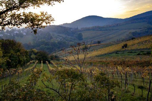 Op zoek naar de ziel van Oostenrijkse wijn