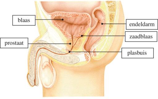 Prostatitis: Symptomen & Behandeling