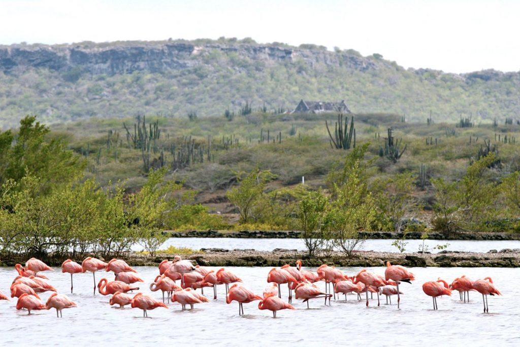 Curaçao - Flamingos