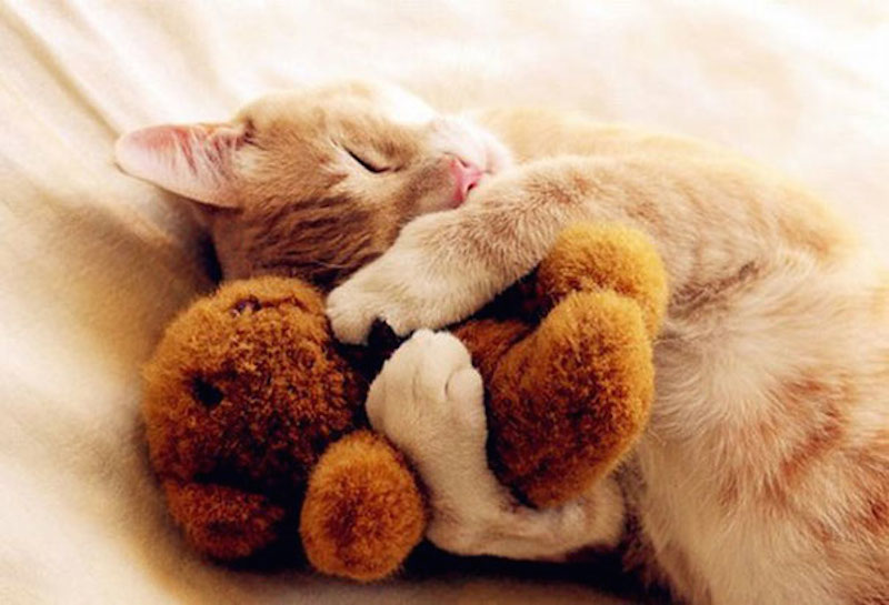 SCHATTIG: deze dieren slapen met een knuffelbeertje