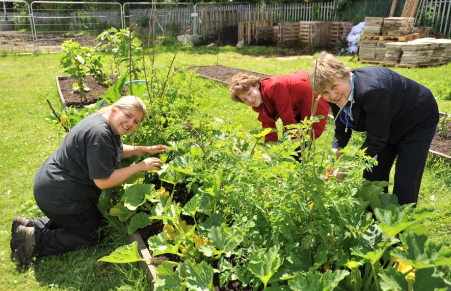 Zelf je tuin Ontwerpen en Aanleggen? Handige tips & Software