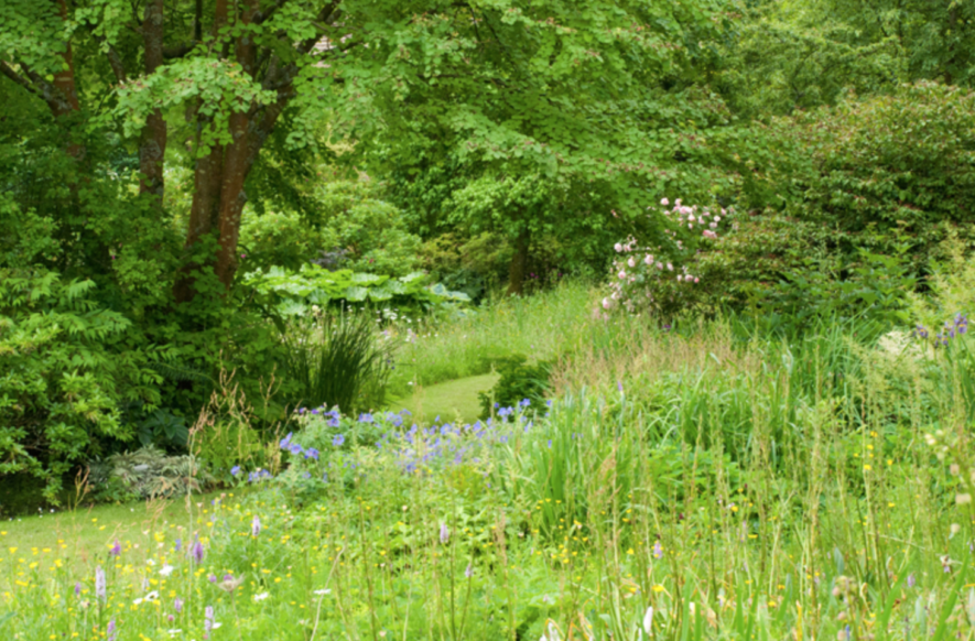 Wilde tuin aanleggen met Minimum aan onderhoud: Enkele Tips!