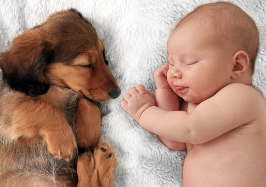 Huisdieren een gevaar bij een pasgeboren baby?