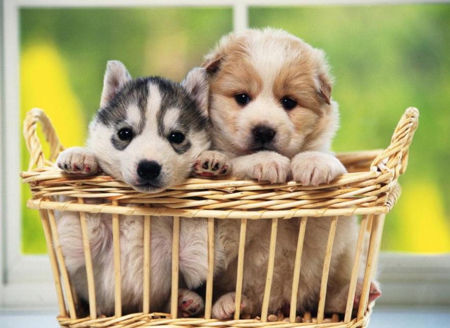 Angst voor vuurwerk en onweer bij huisdieren: Enkele tips