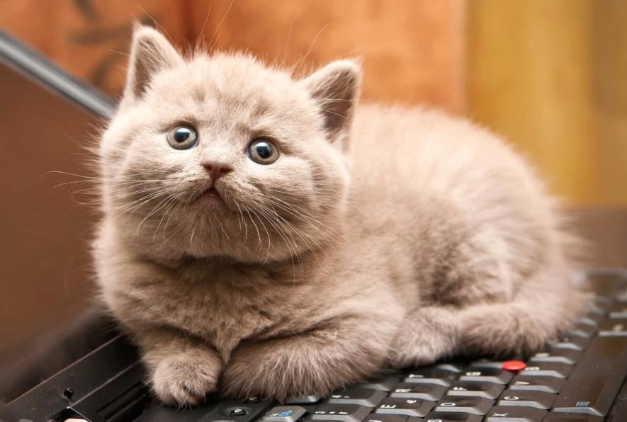11 Tips voor een Gezonde & Gelukkige kat