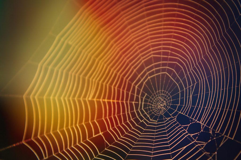 Spinnenbeet: Symptomen, Foto's & Behandeling