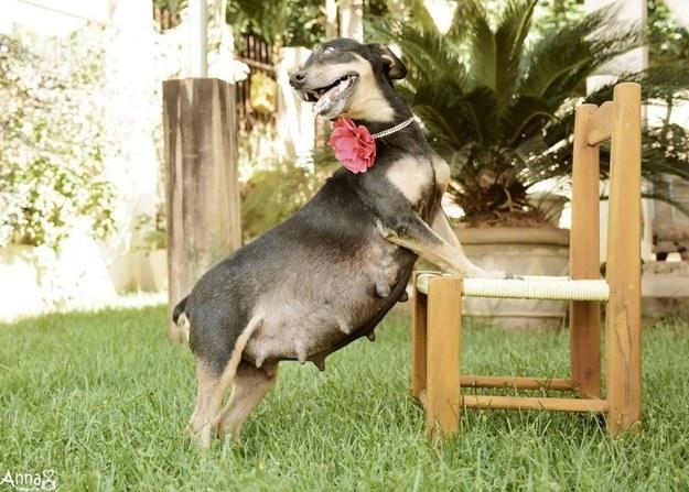 Super schattig: hond maakt fotoshoot van haar zwangerschap!