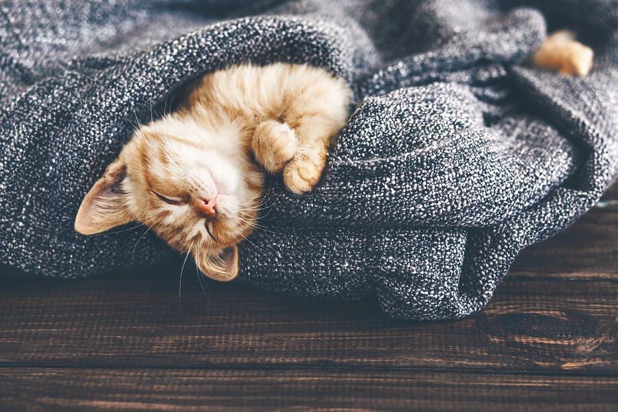 Test: Welk slaaptype ben jij?