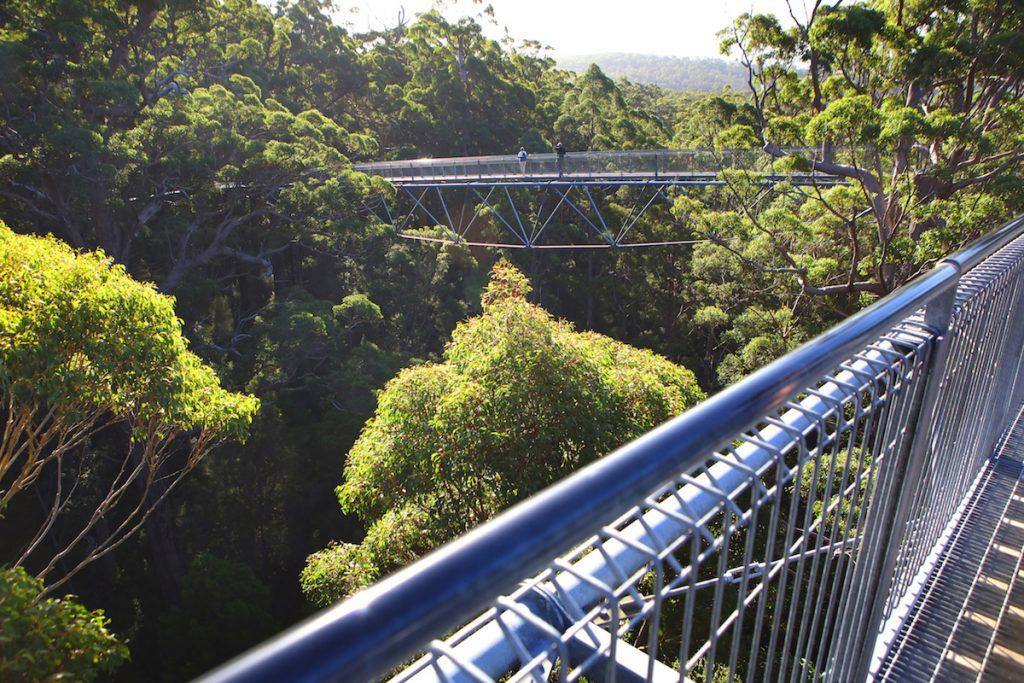 Zuidwest-Australië - Tree top walk