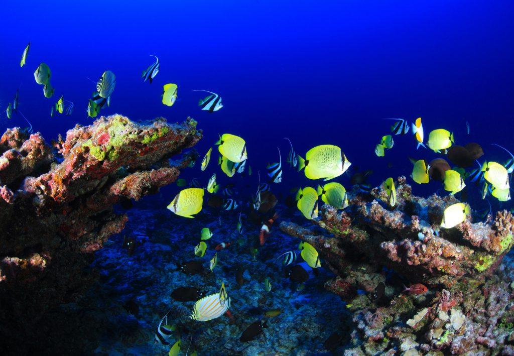 Déjà affaiblis, les stocks de poissons pourraient diminuer de 60% d'ici 2100