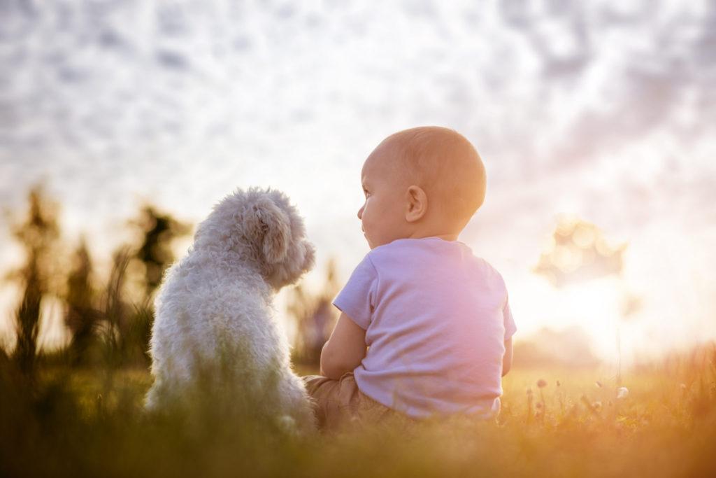 De vele voordelen van een huisdier