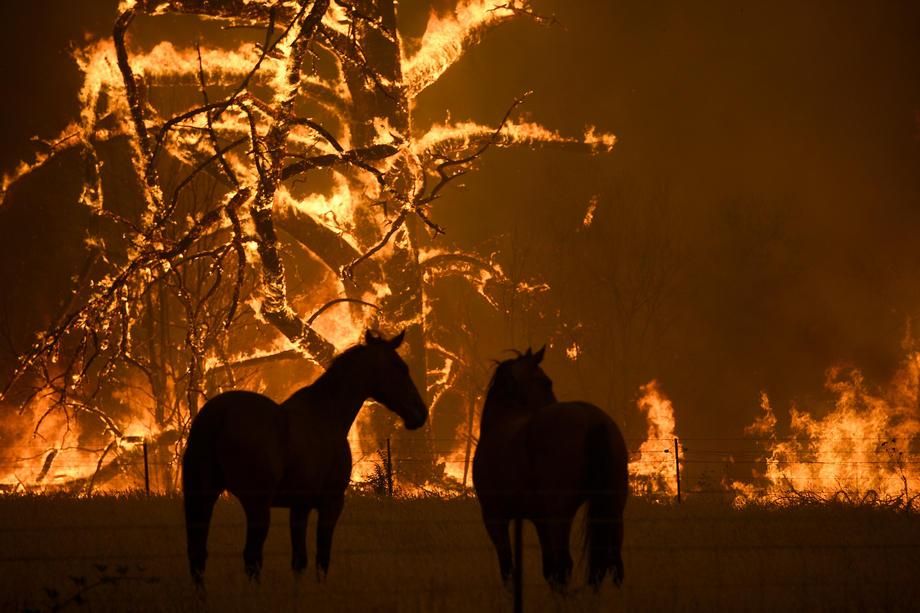 L'heure du bilan: l'hécatombe animale est connue suite aux incendies en Australie