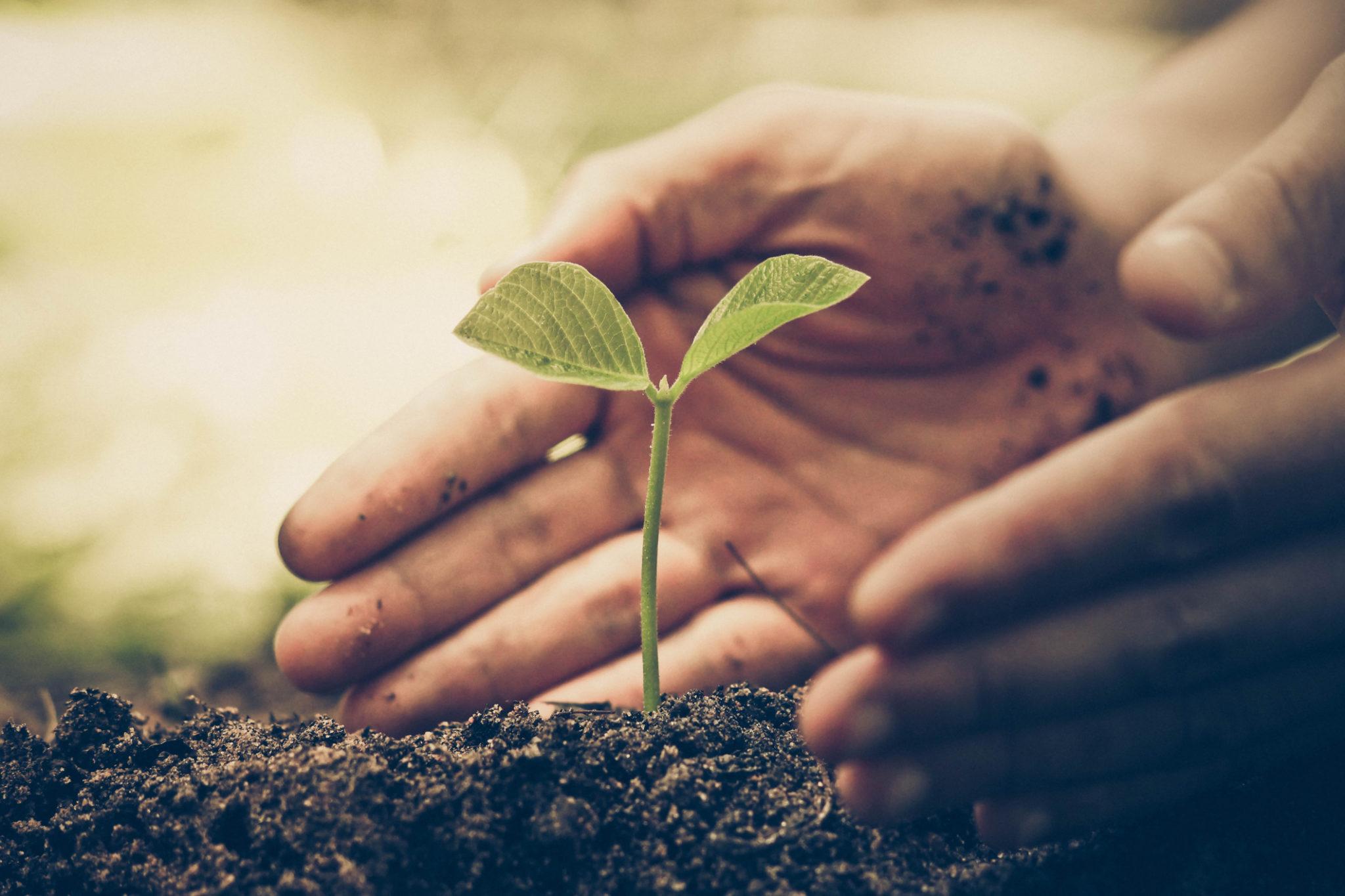 À quoi correspondent les produits biologiques ou végétaux?