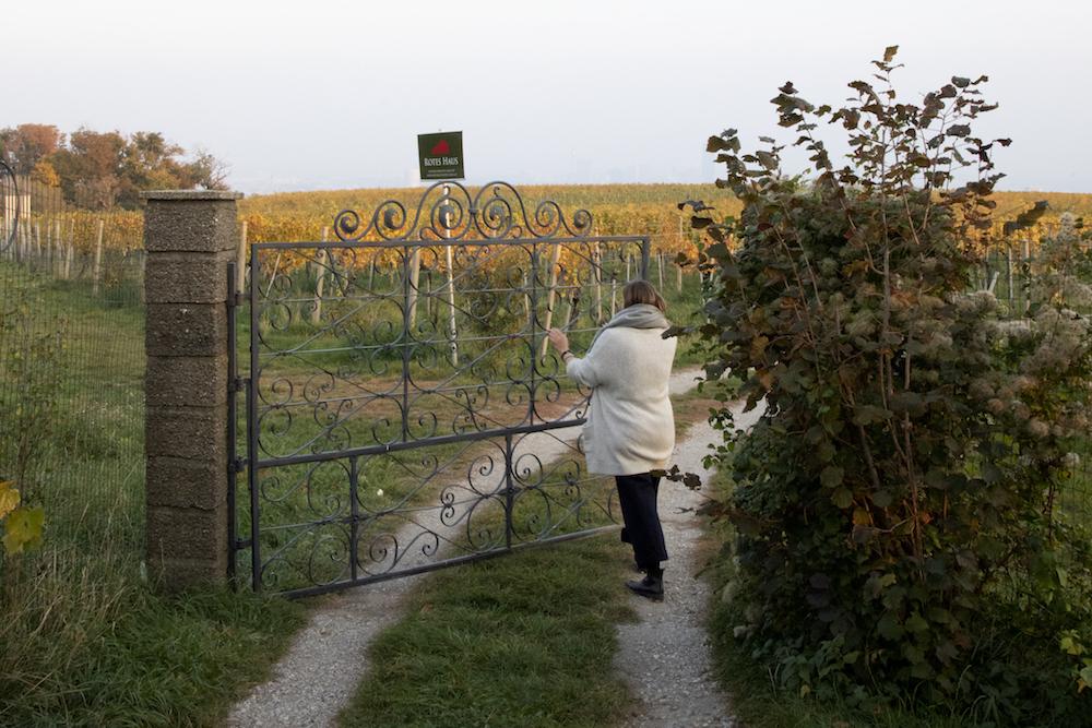 Op zoek naar de ziel van Oostenrijkse wijn - Weingut Mayer am Pfarrplatz